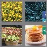 cheats-4-pics-1-word-9-letters-plentiful-4637886