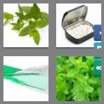 cheats-4-pics-1-word-9-letters-spearmint-5943060