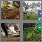 cheats-4-pics-1-word-9-letters-windstorm-9783586