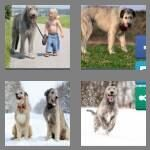 cheats-4-pics-1-word-9-letters-wolfhound-7857011