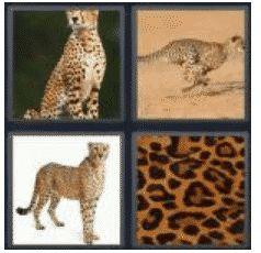 answer-cheetah-2