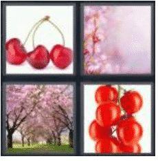 answer-cherry-2