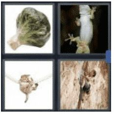 answer-cling-2