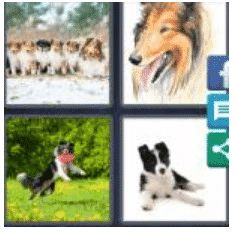 answer-collie-2