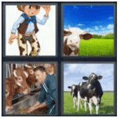 answer-cow-2