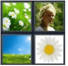 answer-daisy-2