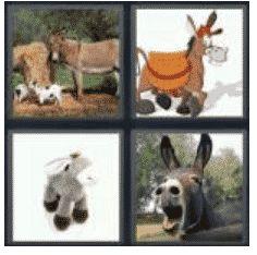 answer-donkey-2