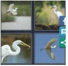 answer-egret-2