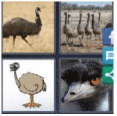 answer-emu-2