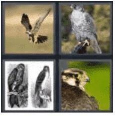 answer-falcon-2