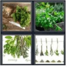 answer-herbs-2