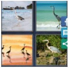 answer-heron-2