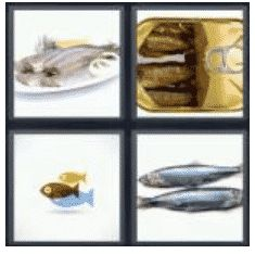answer-herring-2