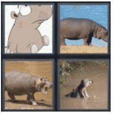 answer-hippo-2
