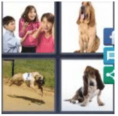 answer-hound-2