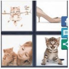 answer-kitten-2