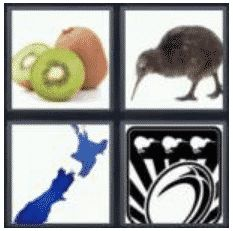 answer-kiwi-2