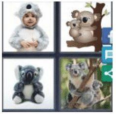answer-koala-2