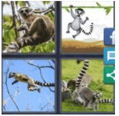 answer-lemur-2
