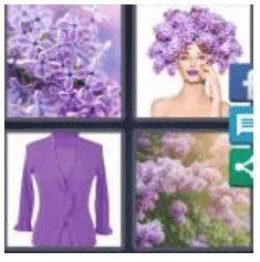 answer-lilacs-2