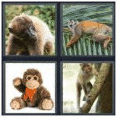 answer-monkey-2
