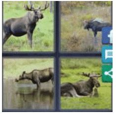 answer-moose-2