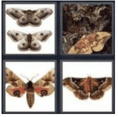 answer-moth-2