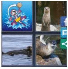 answer-otter-2