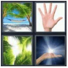 answer-palm-2