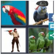 answer-parrot-2