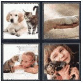 answer-pet-2