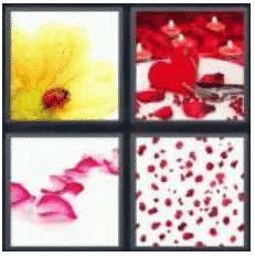 answer-petals-2