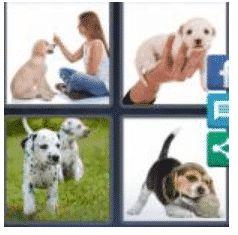 answer-puppy-2