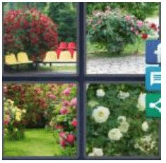 answer-rosebush-2