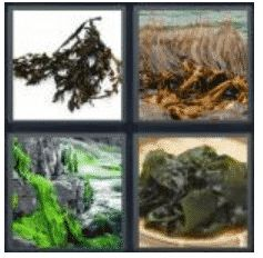 answer-seaweed-2