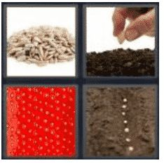 answer-seed-2