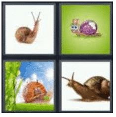 answer-snail-2