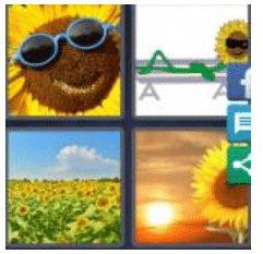 answer-sunflower-2