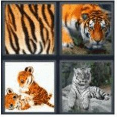 answer-tiger-2