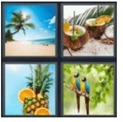 answer-tropical-2