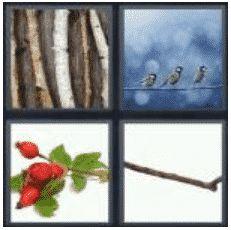 answer-twig-2