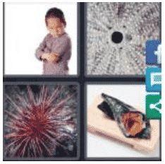 answer-urchin-2