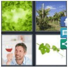 answer-vine-2