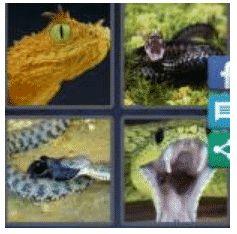 answer-viper-2