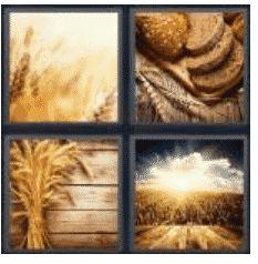 answer-wheat-2