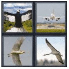 answer-wingspan-2