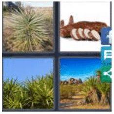 answer-yucca-2